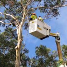 Logo of Woodrowe Tree Technicians