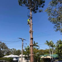 Logo of ALL SUBURBS TREE LOPPING QLD
