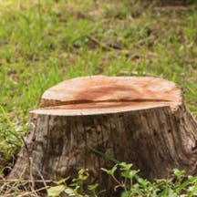 Logo of Brett 4 Trees & Stumps