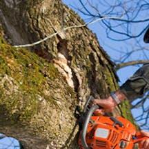 Logo of Urban Tree Lopping