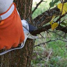 Logo of Cutting Edge Tree Maintenance