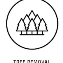 Logo of Tree Essence
