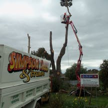 Logo of Simpson Trees & Stumps