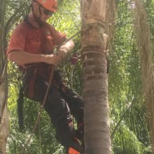 Logo of T & M Tree Services
