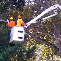 Logo of Robert Keeble Tree Services