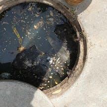 Logo of Kerry Flanagan Wastewater
