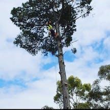 Logo of Major Tree Services