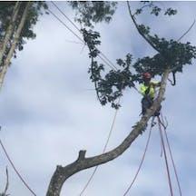 Logo of NQ Tree Lopping