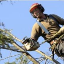 Logo of Hobart Tree Climbers