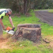 Logo of Adams Stump & Tree Removal
