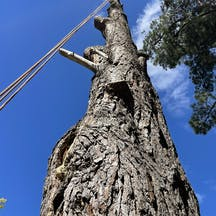 Logo of OToole tree solutions