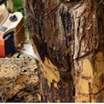 Logo of Axe'em Tree Service