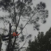 Logo of All Tree Services Aust.