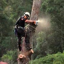 Logo of Central Tree Services Sunshine Coast