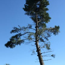 Logo of Peninsula Tree Professionals