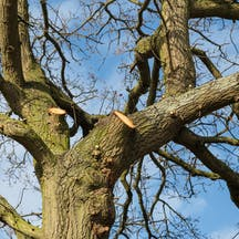 Logo of Trees Need Tree Surgeons