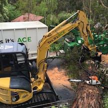 Logo of Ace Tree Management