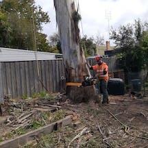 Logo of Cutting Edge Tree Management