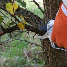 Logo of Dingo's Tree Services