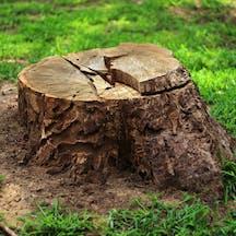 Logo of Brad's Tree Lopping