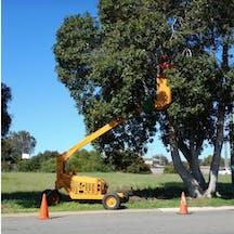 Logo of Aussie Tree Services