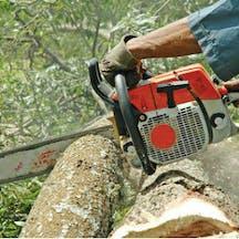 Logo of NT Lumberjacks