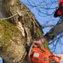 Logo of Northern Tree Specialists Pty Ltd