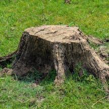 Logo of Tree Services Mackay