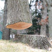 Logo of Tom's Tree Lopping & Pruning