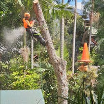 Logo of Advance Tree Lopping