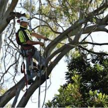 Logo of Kiwi Tree Lopping