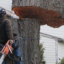 Logo of Mahlon's Tree Lopping