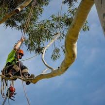 Logo of 15FEET Tree Maintenance