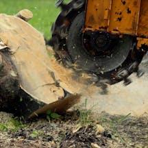 Logo of Michael Bukowski Tree Maintenance