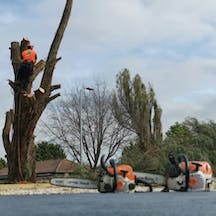 Logo of Robertsons Tree Services