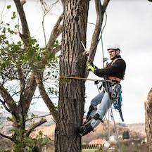 Logo of Treeline Tree Services