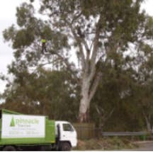 Logo of Pinnacle Tree Care