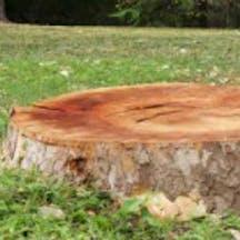 Logo of Woodstock Tree & Stump Removal