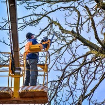Logo of Affordable Price Tree Service