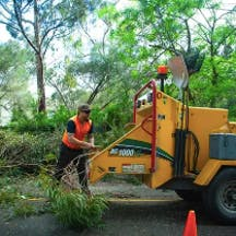 Logo of CTL Services - Tree Removal Adelaide