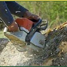 Logo of Your Tree Feller