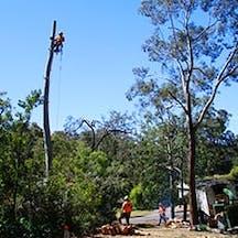 Logo of Agility Professional Tree Service Pty Ltd