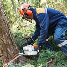 Logo of A Coastwide Tree & Stump Service