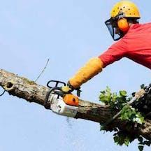 Logo of Chomp Tree Lopping Service