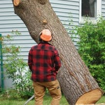 Logo of Troy Weier Tree Service