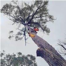 Logo of Gold Coast Stump Busters Pty Ltd