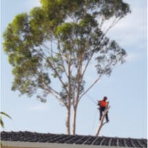 Logo of On The Mark Tree Service