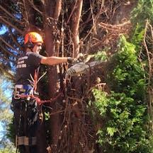 Logo of Adams Complete Tree Care & Rubbish Removal